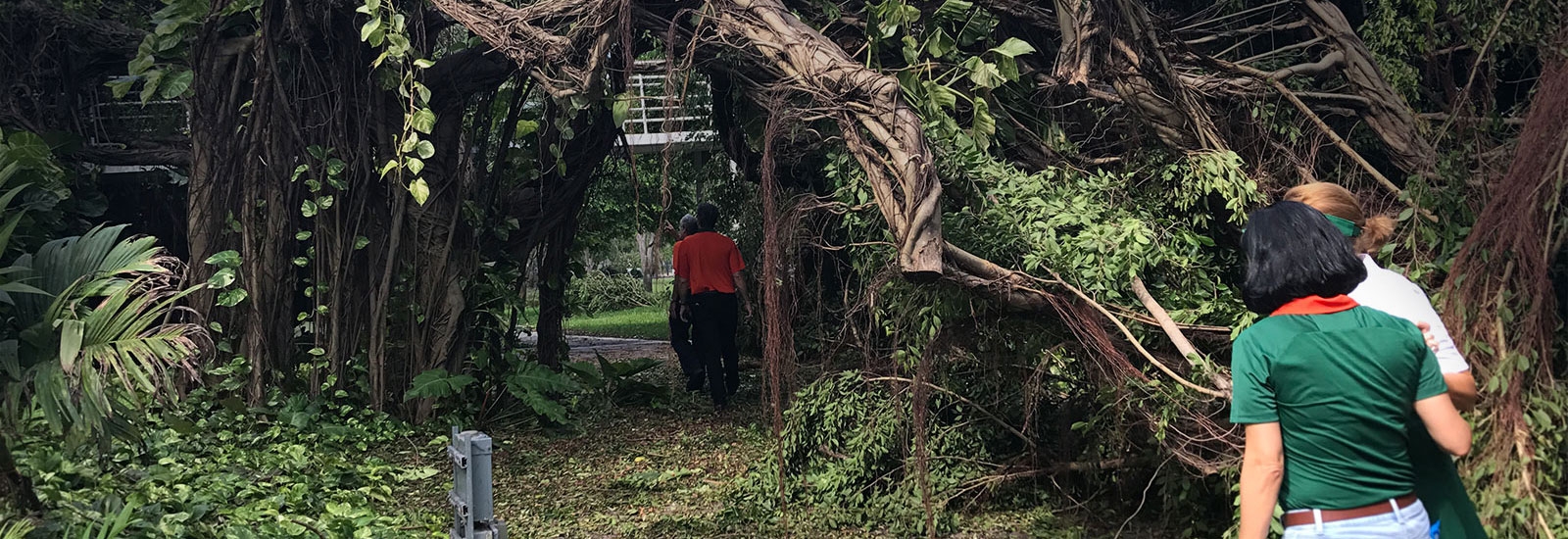 Assessing Damage on Campus After Hurricane Irma